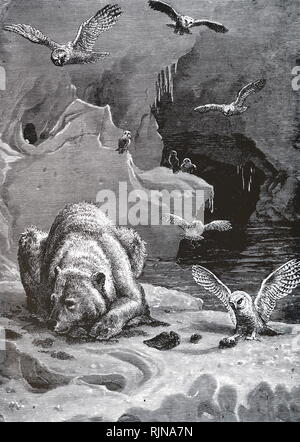 An engraving depicting an Arctic scene with owls and dying polar bear. Dated 19th century - Stock Photo