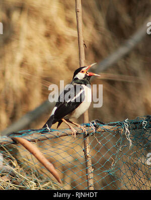 small bird sitting on a bamboo wood - Stock Photo