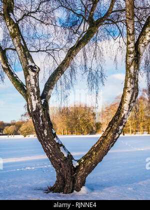 Looking through a bare winter tree on snow-covered ground in Wiltshire. - Stock Photo