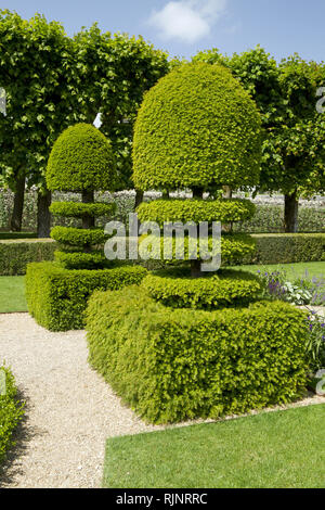 Common yew (Taxus baccata) in topiary in Gardens of Villandry Castle, France - Stock Photo
