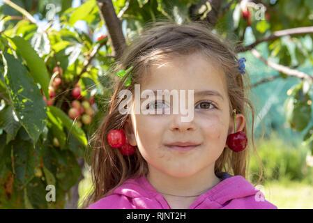 Pair of cherries bigarreau 'Burlat' in earring, spring, Pas de Calais, France - Stock Photo
