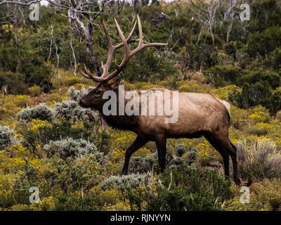 Reindeer walks through the forest tundra. North animal deer. - Stock Photo