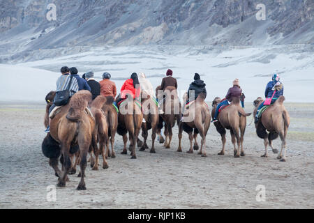 Group of tourists riding bactrian camels in the area of sand dunes near Hunder, Nubra Valley, Ladakh, Jammu and Kashmir, India - Stock Photo
