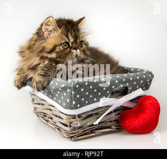 Funny Persian kitten cat is sleeping with red heart - Stock Photo