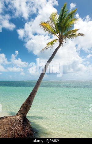 Coconut tree,  turquoise water and golden sand, Caravelle beach, Saint Anne, Guadeloupe, French West Indies. - Stock Photo