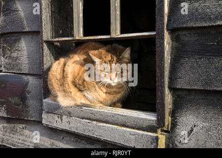 Farm Cat Watching the Road - Stock Photo