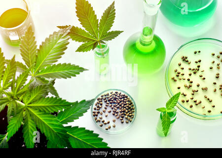 Scientific research of medical cannabis for use in medicine, biotechnology concept - Stock Photo