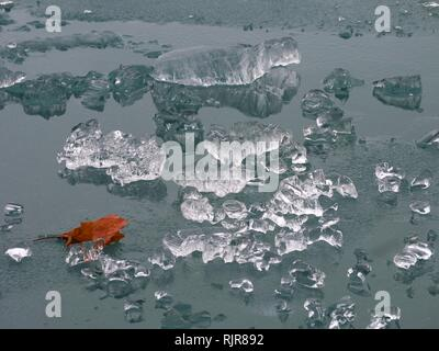 Maple leaf and pieces of clear and shiny ice floating on top of a lake or icebergs left from the polar vortex in the Midwest - Stock Photo