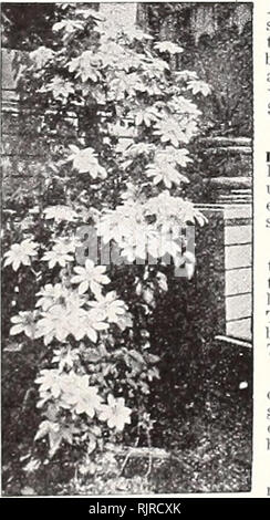 . Autumn 1928 : bulbs seeds shrubs and trees. Fruit trees Utah Salt Lake City; Ornamental trees Utah Salt Lake City; Shrubs Utah Salt Lake City; Climbing plants Utah Salt Lake City; Bulbs (Plants) Utah Salt Lake City; Flowers Seeds Utah Salt Lake City. 18 Porter-Walton Co., Salt Lake City, Utah Hedges, Screens and Windbreaks For the border of the lawn, park or farm, there is dignity, privacy, seclusion and defense in well chosen, well maintained fence of shrubs. It is often desirable to screen objectionable views, outbuildings and neighboring properties. This can be done in a more effective ma - Stock Photo