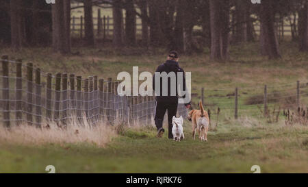 Instagram style image of a man walking his two dogs through a field in the rain - Stock Photo