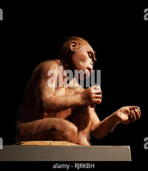 Reconstructed female Homo habilis; a proposed archaic species of Homo, which lived between roughly 2.1 and 1.5 million years ago - Stock Photo