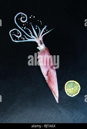 Fresh Raw Squid calamary seafood isolated on dark vintage background with ice from top view - Stock Photo