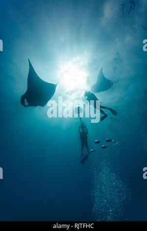 Film crew scuba divers photograph two giant manta rays - Stock Photo
