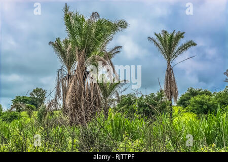 View with typical tropical landscape, trees and other types of vegetation, cloudy sky as background - Stock Photo