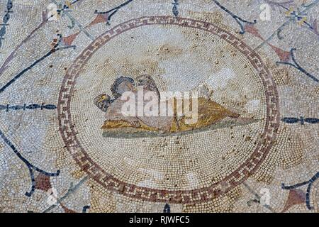 Roman ground mosaic with god Hypnos, Risan, bay of Kotor, province Kotor, Montenegro - Stock Photo
