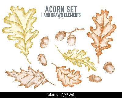Vector collection of hand drawn pastel acorn - Stock Photo