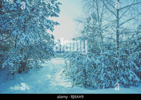 Edge of the winter forest. Footpath in the snowy woods. Winter nature - Stock Photo