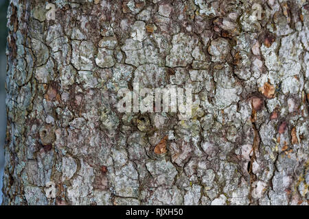 Old tree bark covered with lichen macro photograph for closeup texture - Stock Photo