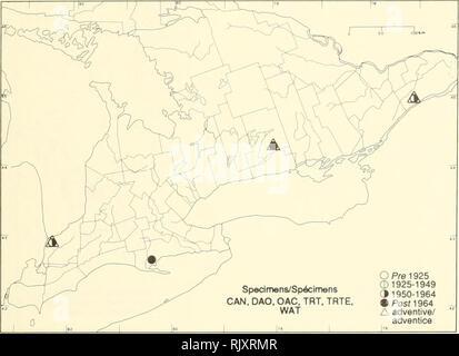 ". Atlas of the rare vascular plants of Ontario. Rare plants; Botany. Atlas of the Rare Vascular Plants of Ontario/Atlas des plantes vasculaires rares de l'Ontario LAMIACEAE Monarda punctata L. Dotted monarda, spotted horsemint, spotted bee-balm Monarde ponctuée. -^^ 1 f'""^ '' -^'^^^''^'ùy^^""'^ '"" '^ 'r Ci ^^--iS^^ ^ r^/v / T^^t^^ p^t> '.0 ^^^M' ^^GTf^^^^^""^^ ^^f%r^^^ ^9 r i Aftor/D'après: Gill 1977, Gould   ,   ,  1962, McClInlock&Epling 1942, ^ .oL.- ( McGregor & BarWoy 197^, ^-xScora 1967 HABITAT: Sandy open areas. STATUS: Rare in Canada. Endangered in  - Stock Photo"