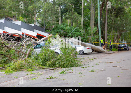Cars crushed by fallen tree on Sydney Pittwater area, Sydney,Australia - Stock Photo