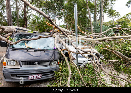 Tree falls and hits parked car on the roof,Sydney,Australia - Stock Photo