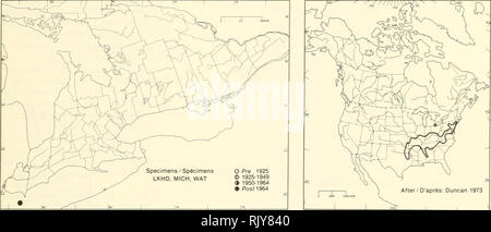 . Atlas of the rare vascular plants of Ontario. Rare plants; Botany. Atlas of the Rare Vascular Plants of Ontario / Atlas des plantes vasculaires rares de l'Ontario CAPRIFOLIACEAE Triosteum angustifolium L. Feverwort Trieste. After / D'après: Duncan 1973 HABITAT: Dry, open woods. STATUS: Rare in Canada. Possibly extirpated in Delaware; rare in Alabanna, Kansas, Mississippi, New Jersey, and New York. NOTES: First discovered in Ontario in 1971. It could not be relocated the following year (Duncan 1973), but her- barium specimens show it was extant in 1981. HABITAT: Forêts claires et sèches. SITU - Stock Photo
