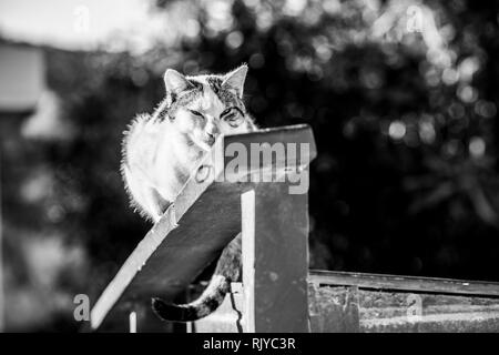 Tabby cat on fence in sunlight, black and white image - Stock Photo