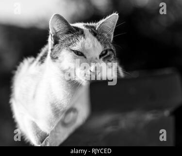 Cat balancing on wooden fence, black and white image - Stock Photo