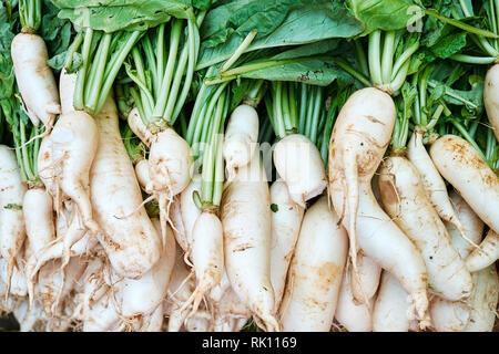 White Japanese Long Daikon Radish Top Down View - Stock Photo