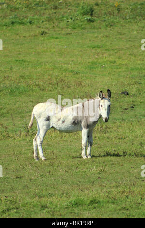 Donkey in summer pasture - Stock Photo
