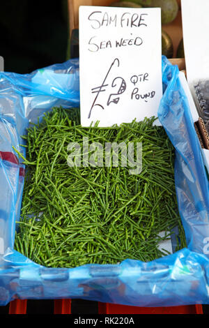Bunch of sam fire seaweed in crate - Stock Photo