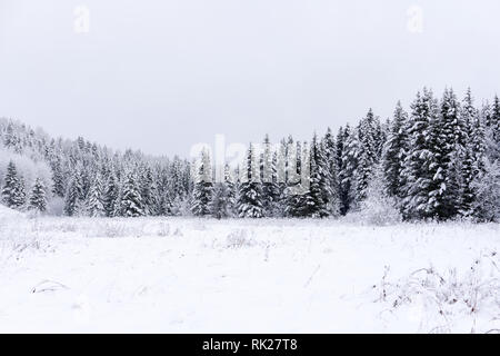 Scenic image of spruces tree Frosty day calm wintry scene Location Europe Ski resort Great picture of wild area Explore the beauty of earth Tourism co - Stock Photo