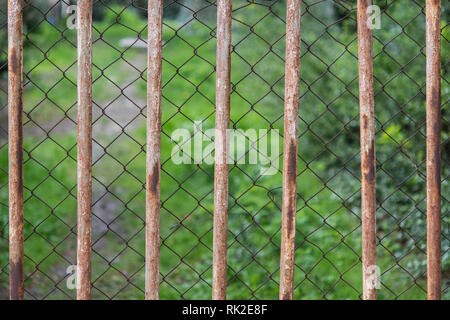 Green vegetation behind a double metal fence. Close-up of metal grate and wire mesh. Old rusty netting and rods with greenery on a blurred background. - Stock Photo