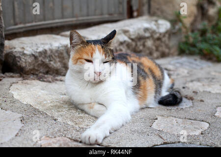Sleepy fluffy cat resting on the sidewalk on a summer day - Stock Photo