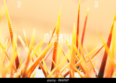 Cactus thorns detail against a colored background , bright yellow and orange colors - Stock Photo