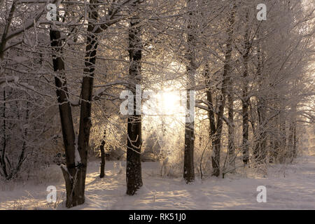 Hoarfrost and snow in the landscape at the edge of the forest . - Stock Photo