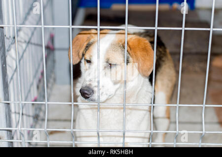 portrait of a fold dog in a shelter cage, charity and mercy theme, animal shelter, dog rescue, volunteer work - Stock Photo