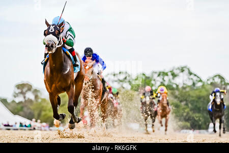 Tampa, Florida, USA. 9th Feb, 2019. February 9, 2019: Well Defined #9, ridden by Pablo Morales, wins the Sam F. Davis Stakes on Tampa Bay Derby Preview Day at Tampa Bay Downs in Tampa, Florida. Scott Serio/Eclipse Sportswire/CSM/Alamy Live News - Stock Photo