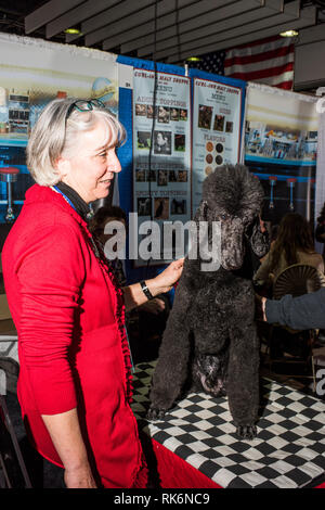 New York, USA. 9th Feb 2019.  Meet the Breeds, Westminster Dog Show, Pier 92, New York City. Credit: Valery Rizzo/Alamy Live News - Stock Photo