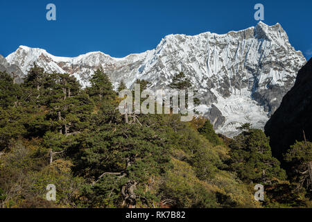 Forest in front of Gangchhenta (Great Tiger Mountain), Gasa District, Snowman Trek, Bhutan - Stock Photo