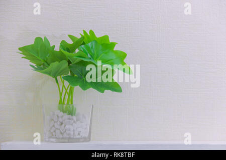 houseplant in cute pots on wooden shelf on white wall with copy space. Minimalist style decoration design. - Stock Photo