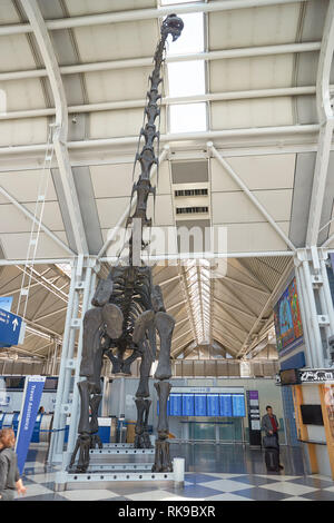 CHICAGO - APRIL 05, 2016: dinosaur skeleton in Chicago O'Hare International Airport. O'Hare is currently a major hub for American Airlines, United Air - Stock Photo