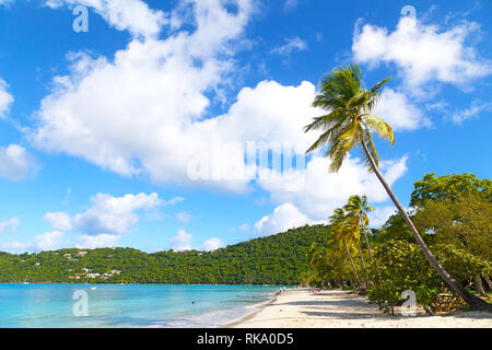 Beautiful Magens Bay beach in the morning on St Thomas Island, US VI. Scenic beach view with palms, pelicans and rolling waves. - Stock Photo