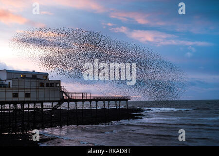 Aberystwyth, Wales, UK. 10th February 2019. UK Weather: At sunset on a windy evening as Storm Erik finally blows itself out, huge flocks of tens  of thousands of  starlings (known as  'adar yr eira' - 'snow birds' in the welsh language)  perform their spectacular 'murmurations' in the sky as they return from their daily feeding grounds to roost for the night on the forest  of cast iron legs underneath  Aberystwyth's Victorian seaside pier.    Credit: keith morris/Alamy Live News - Stock Photo