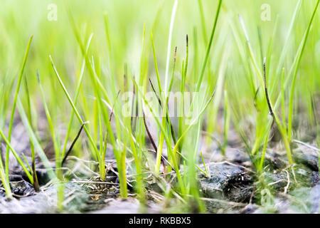 Macro shot of fresh grass, dry hill moor, Swiss Alps, Switzerland - Stock Photo