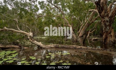 Fallen tree and trees in lagoon full of water - Stock Photo