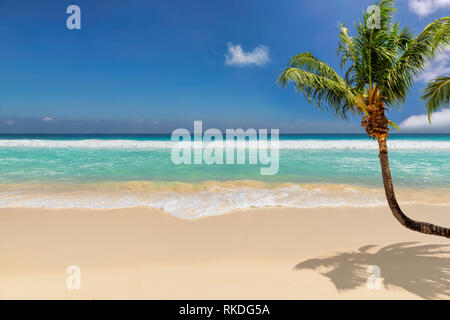 Paradise beach with coco palm over white sand and turquoise sea on exotic island. - Stock Photo
