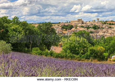 Lavender fields Valensole Forcalquier Alpes-de-Haute-Provence Provence-Alpes-Cote d'Azur France. - Stock Photo