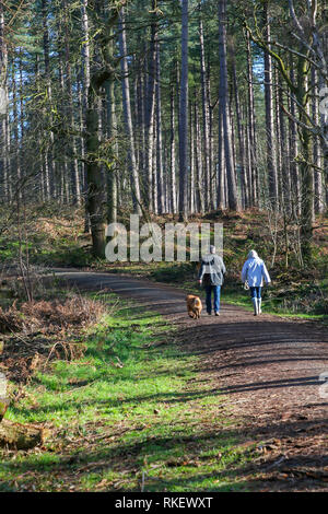 Delamere Forest, Cheshire, UK. 11th Feb, 2019. Monday 11 February 2019 - On a beautiful Monday morning when most people are setting off for work on the first day of the working week some were lucky enough to enjoy the sunshine aith their pets at Delamere Forest, Cheshire, England, UK Credit: John Hopkins/Alamy Live News - Stock Photo