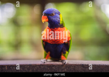 Colorful portrait of Amazon macaw parrot against jungle. Side view of wild parrot on green background. Wildlife and rainforest exotic tropical birds a - Stock Photo